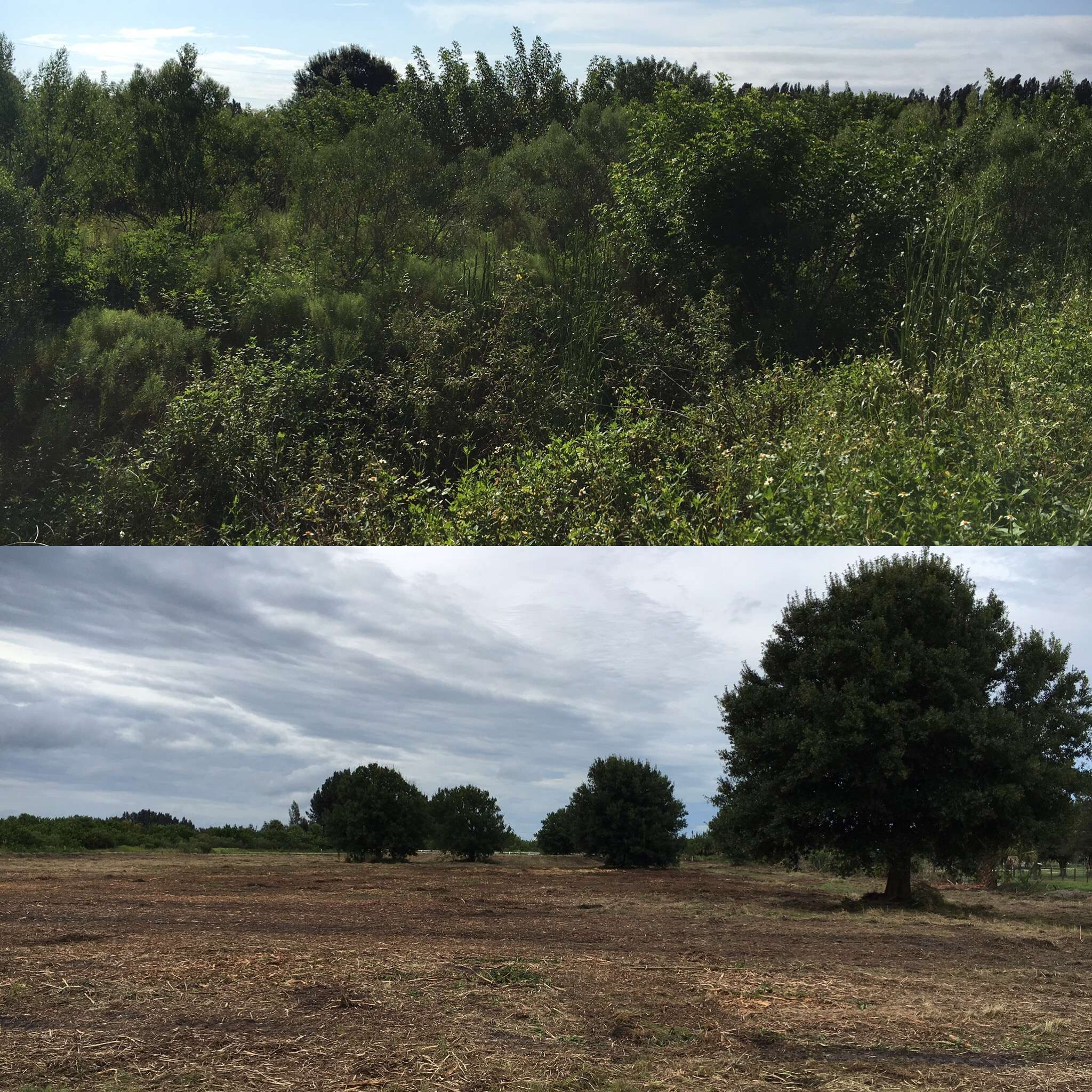 Beofre and after 5 acre